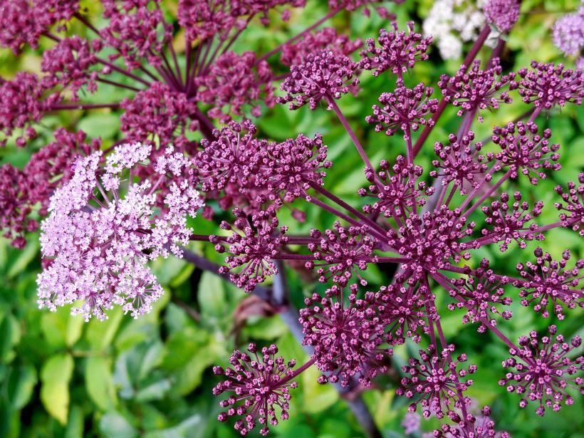 Embodied Herbalism