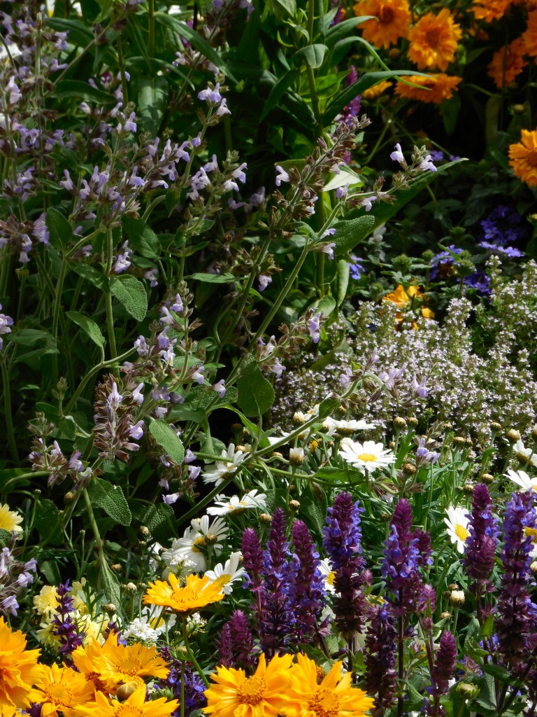 Conscious Gardening: Seven Simple steps to Cocreating with Nature