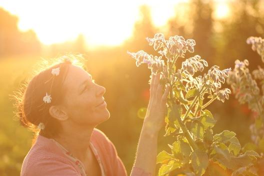 Shamanic Herbalism Starflower